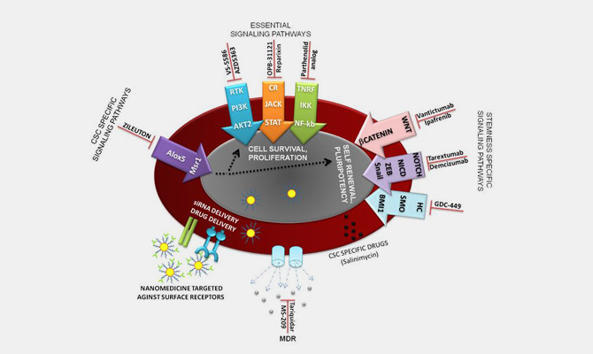 Drug Delivery and Targeting 4